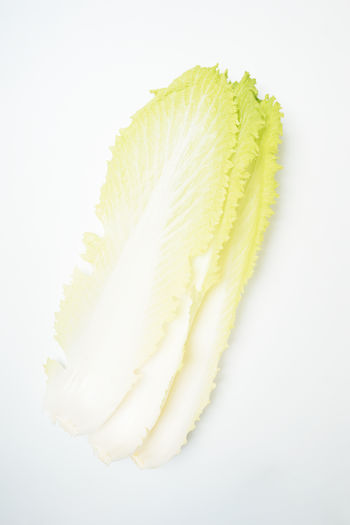 White Background Close-up Freshness Vegetable Raw Food Green Color High Angle View Chinese Cabbage