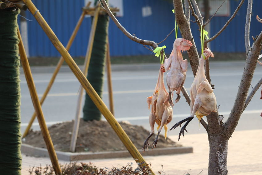 江苏省 Huaian Jiangsu Province 淮安 중국 Trip China 中国 Chickens Chicks Dry Dry Chicken No Idea ? Tree Chicken From The Tree