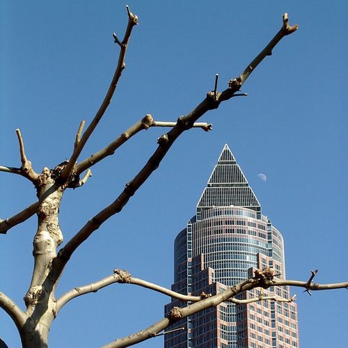 Spring is coming. Frankfurt am Main. March 2005. Architecture Low Angle View Built Structure Outdoors Clear Sky Blue Day No People Building Exterior Sky City Nature Digital Camera