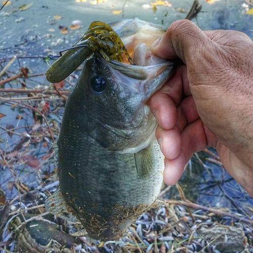 Tube bait the king of soft plastic! Tube Netbait Bassfishing Thewaterismystadium Fishingitaly BassfishingStyle Bass Bassinitaly Softplastics