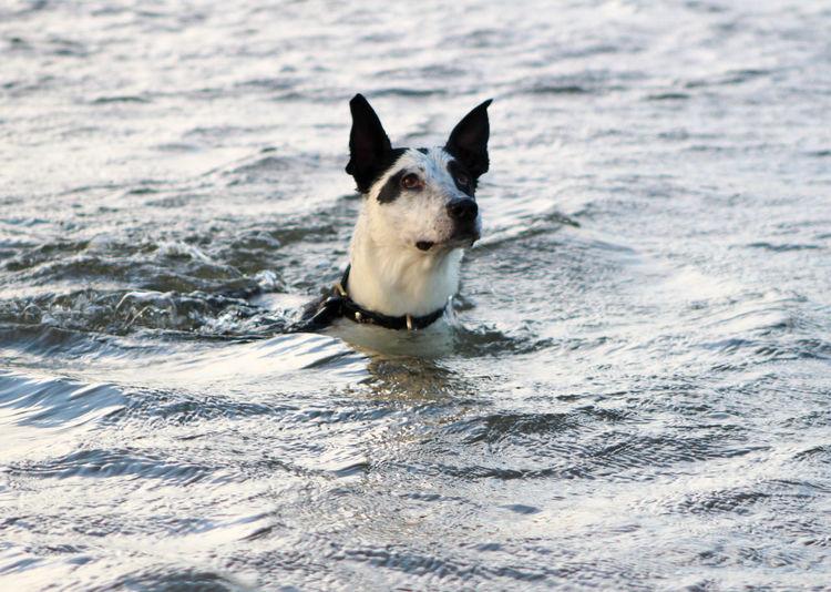 Portrait of dog swimming in sea