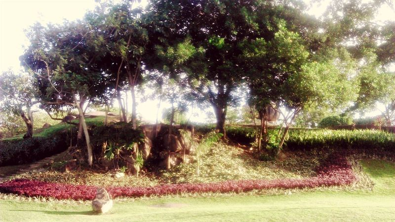 Relaxing Hello World Nature Tree OpenEditCreativ Beautiful Nature