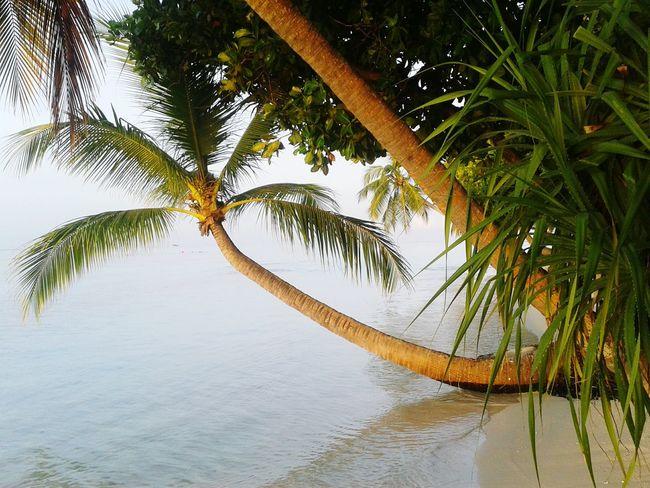 Vilamenhoo Island, Maldives Tropical Plants Palm Trees Beautiful Surroundings Tropical Paradise Sunset Natural Beauty!