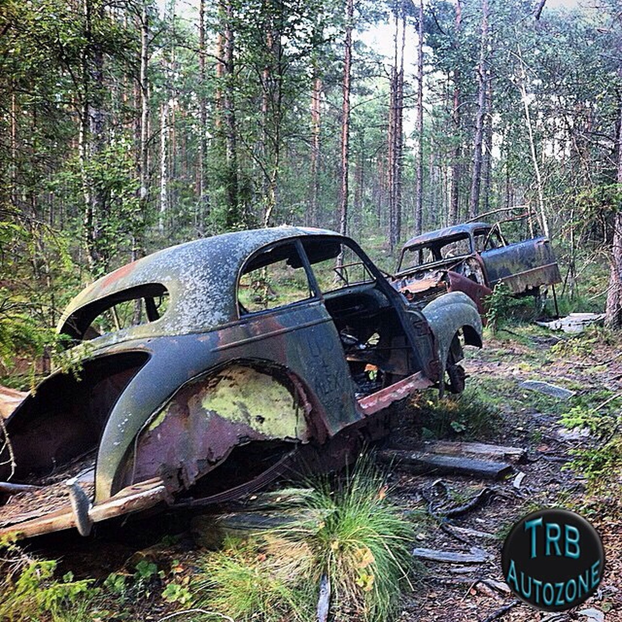tree, abandoned, transportation, forest, obsolete, old, damaged, mode of transport, deterioration, run-down, rusty, land vehicle, day, text, outdoors, no people, weathered, communication, car, growth