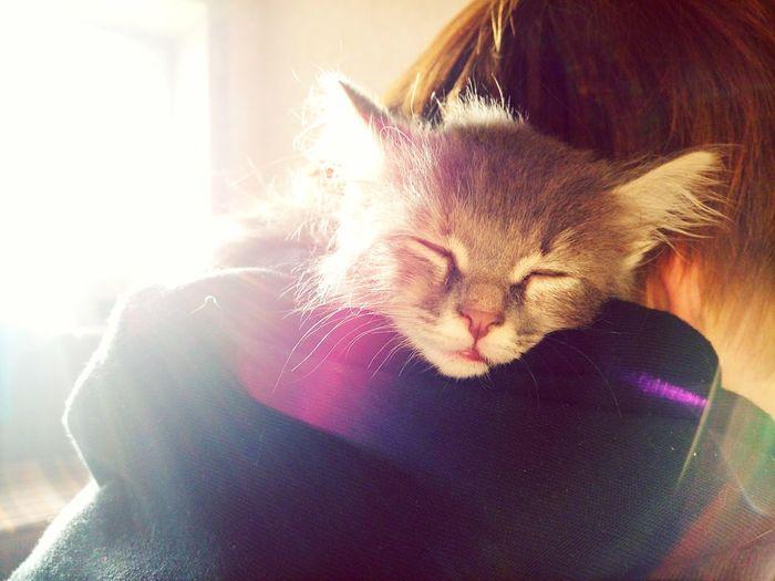 Cat♡ Cat First