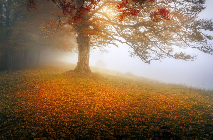 Foggy morning day Tree Wood Autumn Fall Fog Foggy Foggy Day Forest Landscape Leaf Mist Nature Outdoors Season  Tranquility Tree