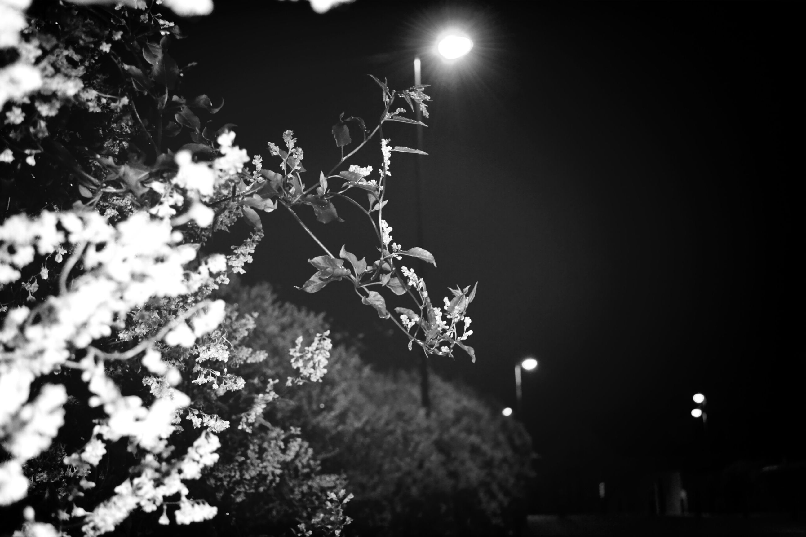 low angle view, night, tree, illuminated, growth, lighting equipment, branch, clear sky, street light, nature, plant, outdoors, built structure, no people, silhouette, sky, dusk, beauty in nature, building exterior, leaf