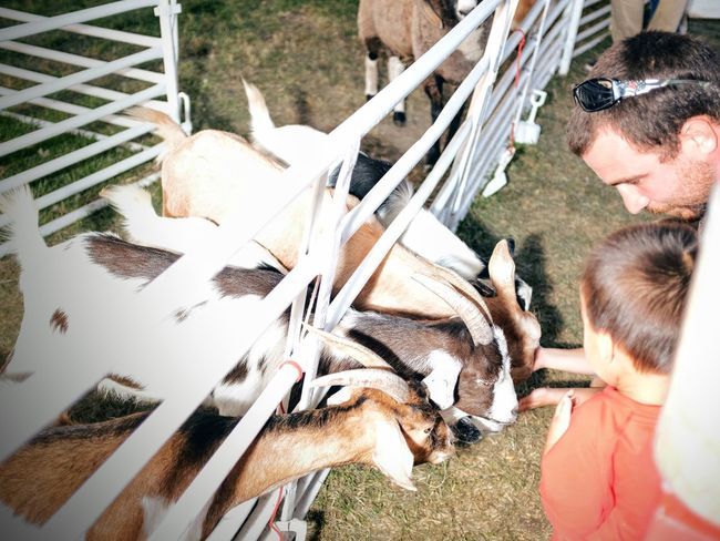 Nebraska State Fair - Grand Island, Nebraska August 2016 - The perils of using manual mode flash on the fly... A Day In The Life Americans Blown Highlights Camera Work Carnival Color Photography Cultures EyeEm Gallery Fairground Feeding Animals Flash Photography Fuji X100s Getty Images High Angle View Lifestyles Mistakes Happen Nebraska Outdoors Petting Zoo Photo Essay Photography Lesson State Fair Storytelling Streetphotography Summertime