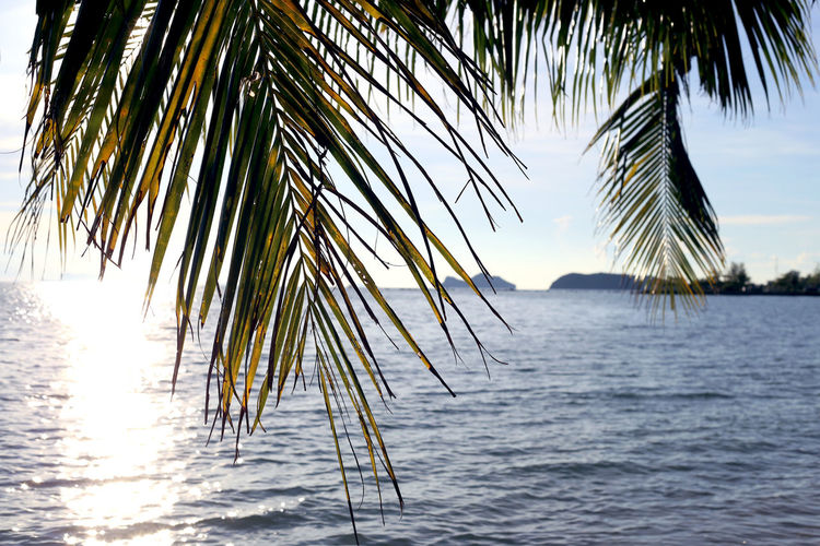 Water Tropical Climate Sea Plant Nature Beauty In Nature Palm Leaf Palm Tree Evening Tropical Seascape Coconut Palm Tree Beach Island Vacations Travel Rest Relax Relaxing