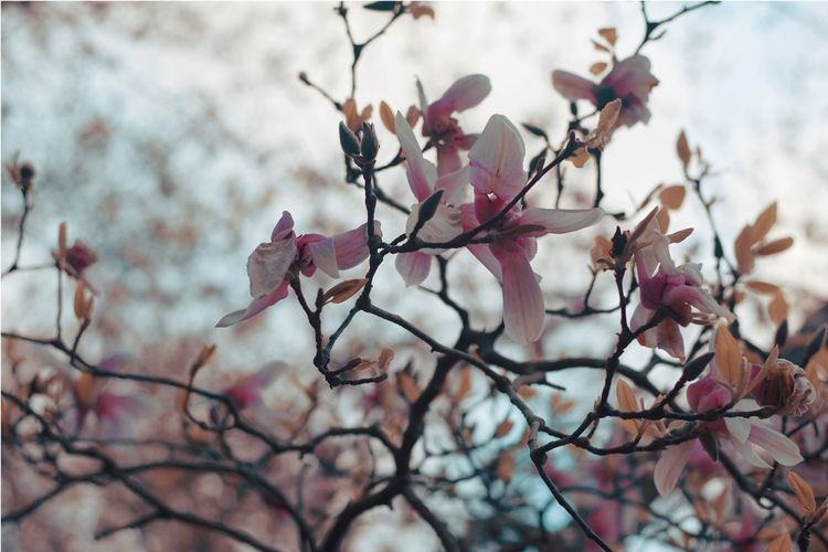 Flower Beauty In Nature Nature Fragility Branch Petal Freshness Day Growth Springtime Tree Focus On Foreground Pink Color Blossom No People Outdoors Flower Head Close-up Sky Bright Photography