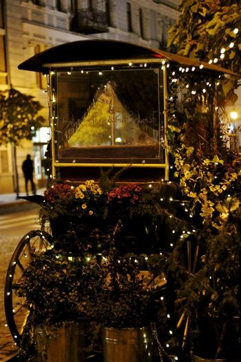 @Barbarestan Georgia Night Lights Nightphotography Tbilisi, Carriage Ride Christmas Christmas Decoration Christmas Lights Close-up Flower Freshness Illuminated Nature Night No People Outdoors Travel Destinations Tree