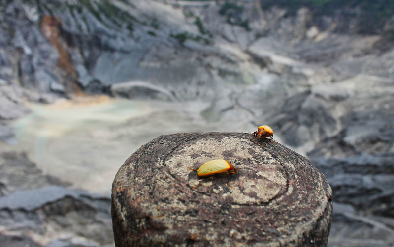 Mt. Tangkuban Parahu, Jawa barat, Indonesia. Animals In The Wild Animal Themes Animal Wildlife One Animal Animal Focus On Foreground Day No People Solid Rock Rock - Object Close-up Nature Outdoors Invertebrate Selective Focus Insect Wood - Material Orange Color Textured  EyeEmNewHere EyeEm Best Shots EyeEm Nature Lover Nature Beauty In Nature