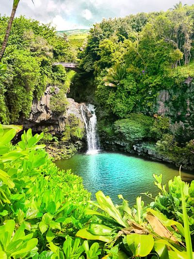 Hawaiin Waterfalls Hawaii Water Plant Green Color Nature Growth Beauty In Nature Day No People Scenics - Nature Flowing Water Lake Motion