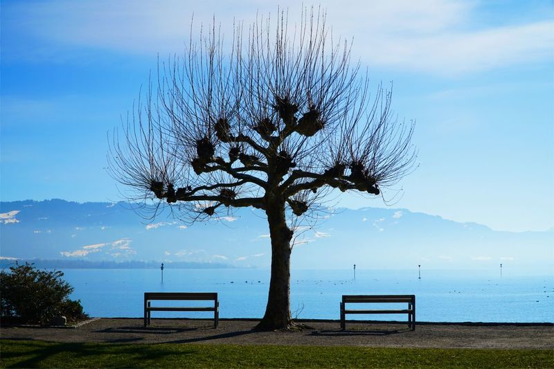 Bench by tree on field against sky
