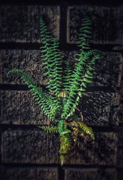 Life wants to live. No People Outdoors Green Plant Bricks Fern Life Living Longview, Tx Building Exterior