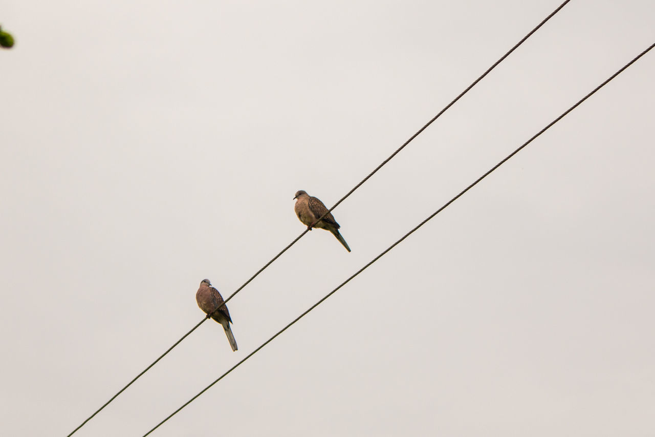 copy space, cable, animals in the wild, bird, animal themes, perching, low angle view, clear sky, animal wildlife, no people, day, togetherness, nature, outdoors, teamwork, sparrow, sky