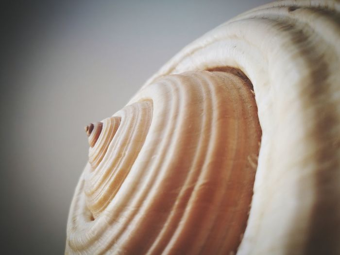Close-up Food And Drink Seashell Flour Shell Raw Food