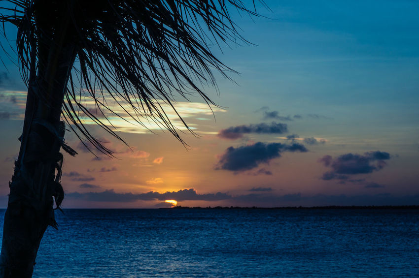 Palm Tree Beach Beauty In Nature Horizon Horizon Over Water Nature No People Outdoors Scenics Sea Silhouette Sky Sun Sunset Tranquil Scene Tranquility Tree Water
