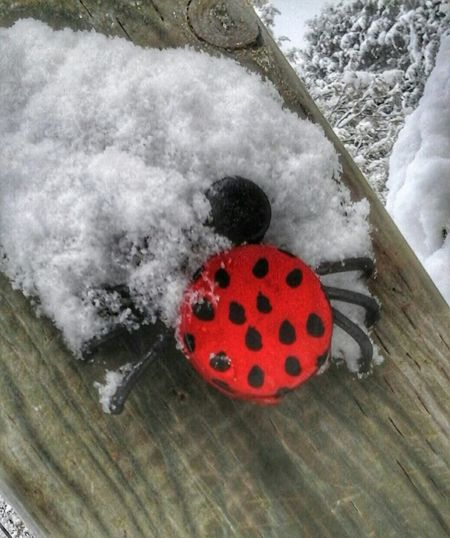 "lady bug says ""WTF"" Canada Coast To Coast Samsung Galaxy 4 Snowing Early Snowfall My Backyard"