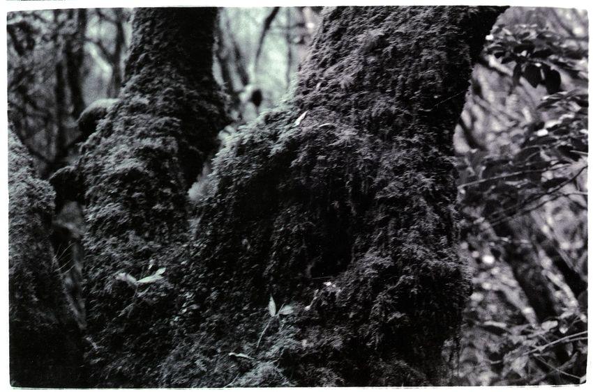 Forest LaGomeraIsland Miracles Wildlife & Nature Wonderwood Blackandwhite Blackandwhite Photography Rainforest Tweda