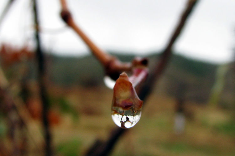 Beauty In Nature Branch Close-up Day Drop Focus On Foreground Fragility Growth Mouth Open Nature No People Outdoors Plant Plant Stem Selective Focus Tranquility Tree Vulnerability  Water Wet