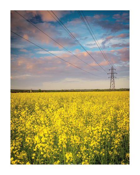 Yellow Sky Landscape Beauty In Nature Flower Land Field