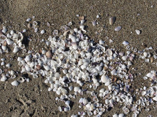 Seashells on sand. Summer beach background. Top view Background Beach Clam Clean Coast Conchiglie Grain Grit Light Littoral Lots Marine Mediterranean Sea Mollusc Sand Sandy Sea Seashell SHELLFISH  Shells Strand Summer Surface Top View Vacations