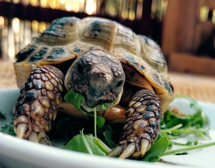 Turtle 🐢 Ukraine Nexus5x WithCat