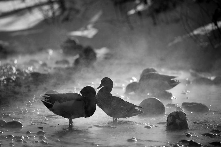 Ducks enjoying