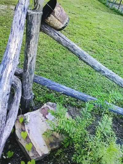 Outdoors Grass Day No People Nature Close-up Old Fence Post Old Fence Post In Moringglorys Freshness Flower Beauty In Nature Growth Green Color Plant Landscape Outdoor Photography Tranquility Lush - Description Beauty
