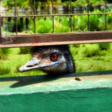 Miradas que matan. !! Animal Nandu Zoo Zoológicodepalerno Palermo Argentina