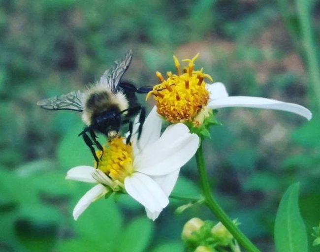 The Bee Pollinating Flower LoveFl Emeraldcoast Emeraldcoasting HTCOneM9 Htconelife Oneography 20 .7mp @htc @HTCUSA @HTC_UK @HTCelevate @HTCMEA @HTC_IN @HTCIreland @HTCCanada @HTCMalaysia @htcsouthasia @htcfrance TeamHTC IBleedGreen @sharealittlesunshine @pureflorida