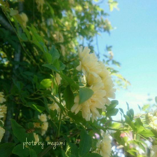 久しぶりの五月晴れ💛 Growth Plant Leaf Nature Green Color Outdoors No People Flower Close-up Beauty In Nature Day Tree Yellow Freshness Branch