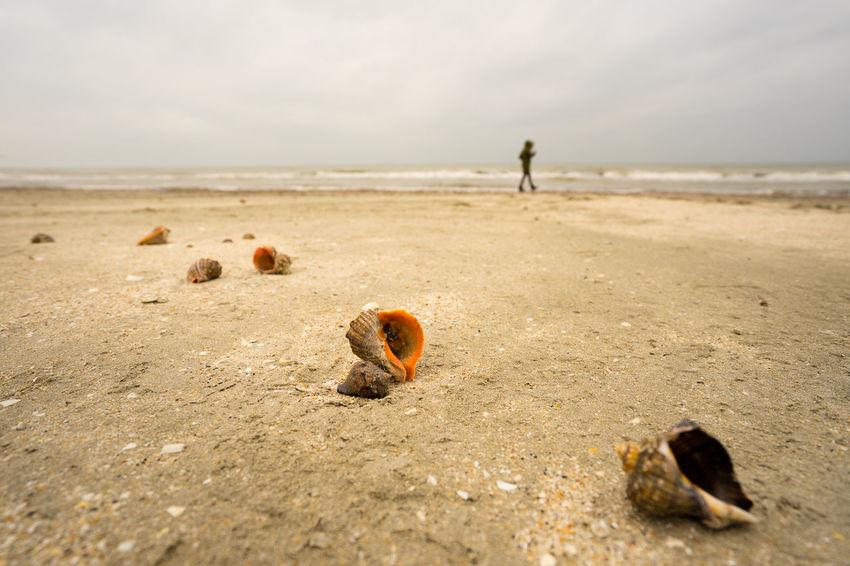 Beach Sand Vacations Sea Outdoors Day Romania Mareaneagra Blacksea Adrianmitu Human In Geometry Snail One Person Streetphotography Beachphotography