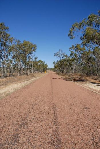 Outback road Blue Clear Sky Day Diminishing Perspective Empty Road Gum Trees Journey Landscape Nature No Cars  No People No Traffic Outback Outback Australia Outdoors Road Scenics Sealed Road Sky Straight Road Travel Tree