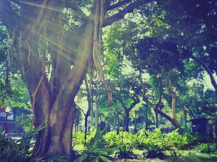 The Five Senses Nature