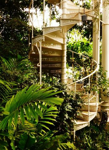 Tree Growth No People Plant Front Or Back Yard Day Outdoors Architecture Nature Building Exterior Close-up Greenhouse Park Austria Travel Destinations Vienna Travelling Photography Architecture Schönbrunn Stairway To Heaven Stairs PalmHouse Green Greenhouse Travel