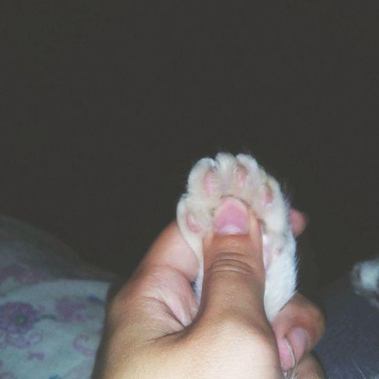 Котик лапа милоефото Необычноефото💁🏽 продаю