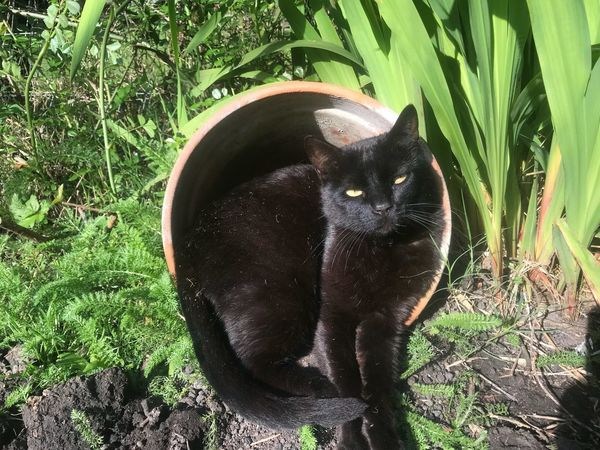 My cat punky, taking a sun bath Sun Bath Black Cat Cat Plant Green Color Nature No People Day Animal Animal Themes Sunlight One Animal Vertebrate Grass Land High Angle View Field Growth Mammal Close-up Outdoors Animal Wildlife Pets