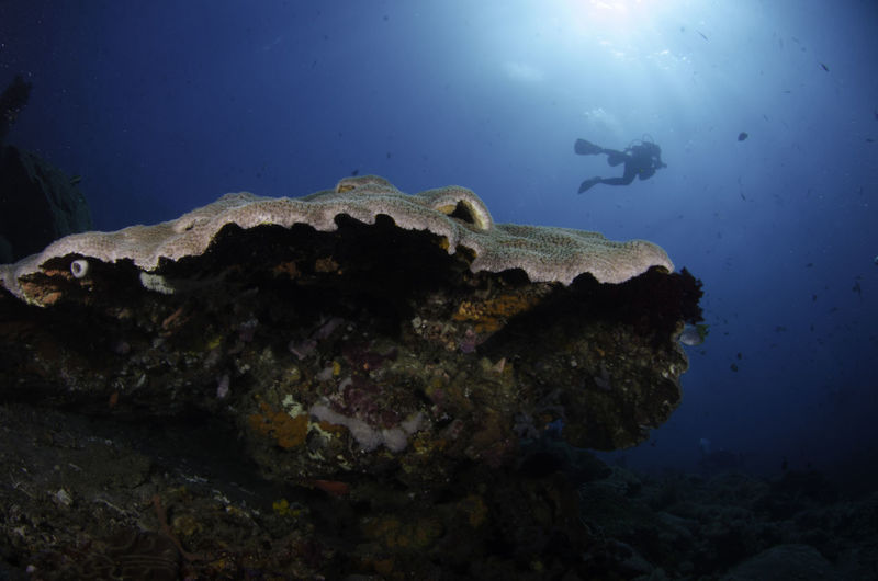 Beauty In Nature Coral Coralreef Divelandscape Diving INDONESIA Marine Life Marinelife Nature Ocean Scuba Diving Sun Burst Underwater Underwater Photography Underwaterphotography