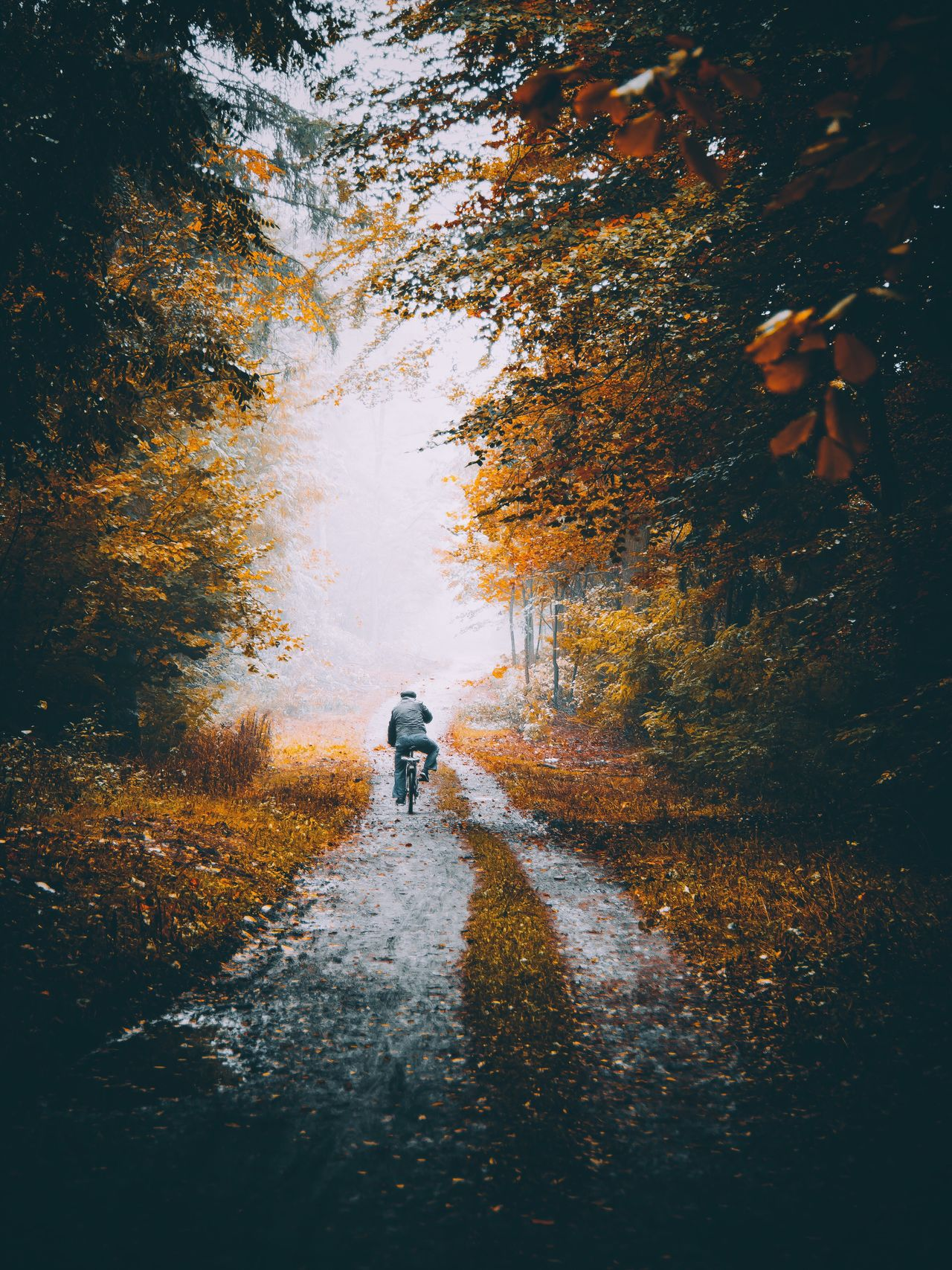 Rear view of man on bicycle in an autumn day