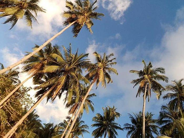 Paradise TropicalIsland  Travelforlife Trees Blueskyline Clouds Localscene Elnido Palawan Amazingphil Amazingbeach Ph Vacation