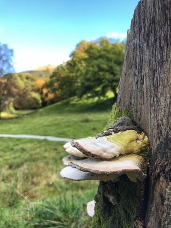 Tree Tree Trunk Fungus Focus On Foreground Scenics Outdoors Close-up Tranquil Scene My Smartphone Life IPhoneography Iphonephotography IPhone Photography Eye4photography  Iphoneonly EyeEm Best Shots EyeEm Gallery IPhone EyeEm Beauty In Nature EyeEm Nature Lover Rural Scene Non-urban Scene Nature Day Nature