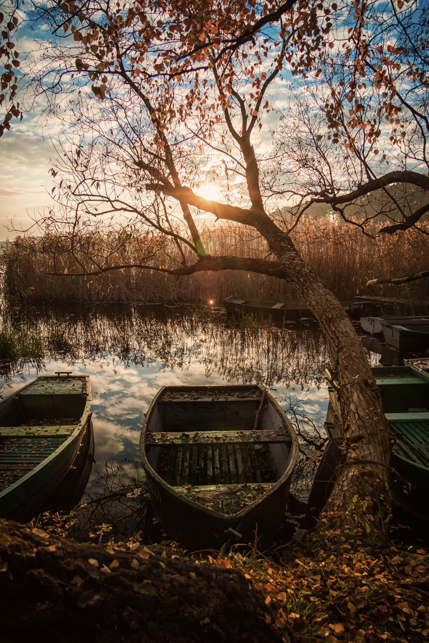 tree, plant, nature, sky, water, transportation, mode of transportation, nautical vessel, tranquility, sunset, no people, sunlight, land, lake, outdoors, tranquil scene, moored, beauty in nature, day, rowboat