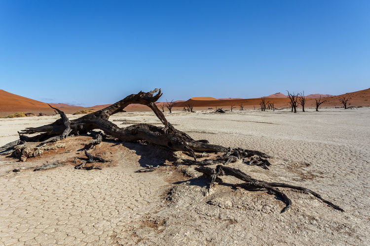 View of driftwood in desert against clear sky