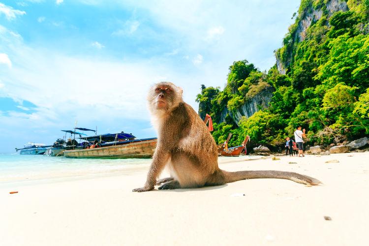 Monkey sitting on the beach