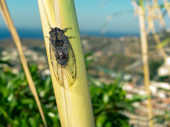 Cicada Animals