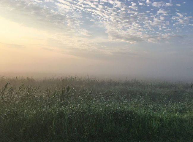 Plant Field Beauty In Nature Tranquility Tranquil Scene Sky Landscape Scenics - Nature Grass Growth Fog Cloud - Sky Outdoors Rural Scene No People Non-urban Scene Land Environment Day Nature Sunrise