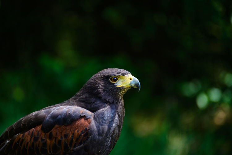 Focus On Foreground Beauty In Nature Full Frame Nikonphotography Tamron Lens Nikon D600 The Great Outdoors - 2017 EyeEm Awards Animals In The Wild Animal Wildlife Portrait Nature Bird Outdoors Day Close-up One Animal Animal Themes No People Hawk