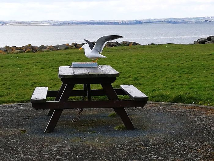 Bench Bird Water Sea Beach Sky Landscape Seagull Spread Wings Flapping Sea Bird Shore Scenics Tranquil Scene